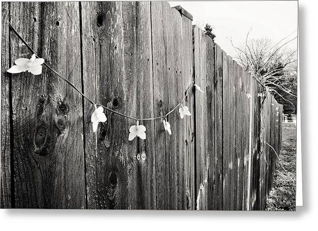 Butterflies On A Rustic Fence Greeting Card