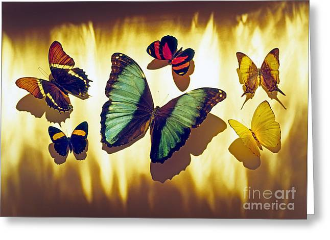 Butterflies Greeting Card by Tony Cordoza
