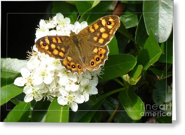 Greeting Card featuring the photograph Butterfly 1 by Jean Bernard Roussilhe