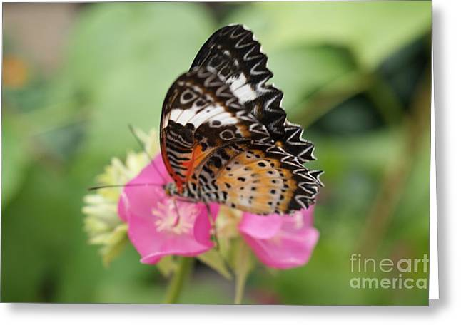 Butterfly 1 Greeting Card by Tina McKay-Brown