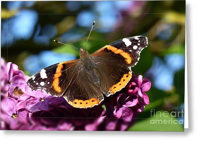 Butterfly 12 Greeting Card by Jean Bernard Roussilhe