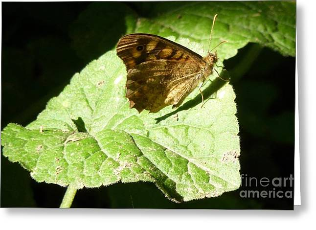 Greeting Card featuring the photograph Butterfly 2 by Jean Bernard Roussilhe