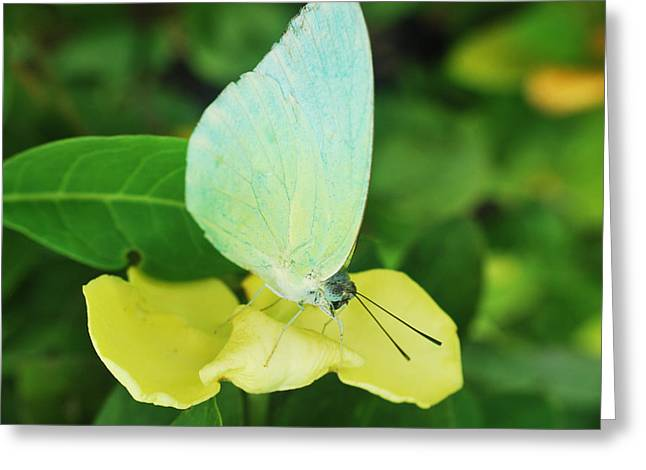 Butterfly 2 Greeting Card by Susette Lacsina