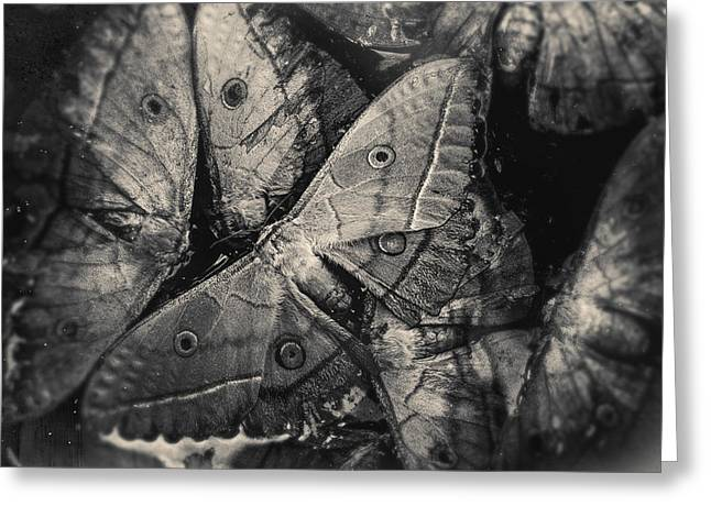 Butterfly #2056 Greeting Card
