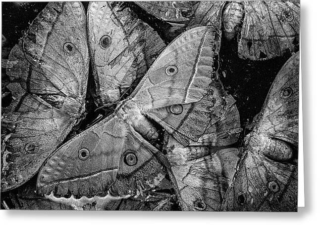 Butterfly #2056 Bw Greeting Card
