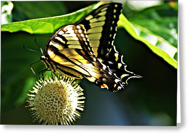 Butterfly 4 Greeting Card by Joe Faherty