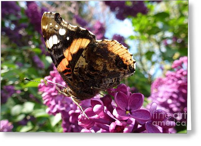 Butterfly 7 Greeting Card by Jean Bernard Roussilhe