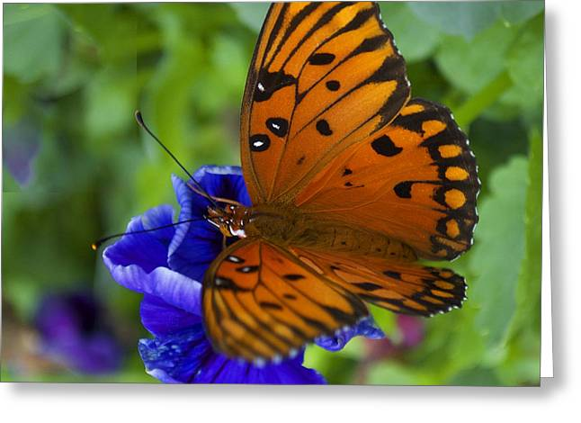 Butterfly 8-2 Greeting Card
