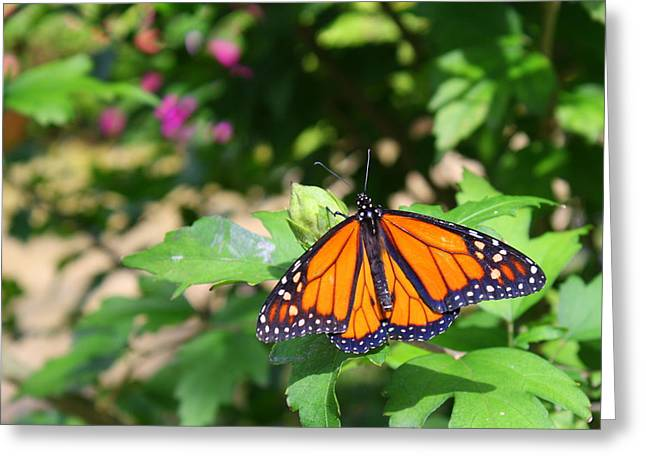 Butterfly Greeting Card by Allison Whitener
