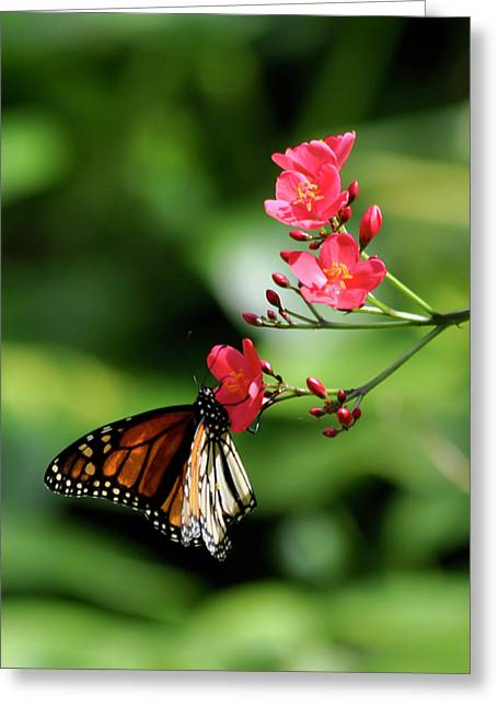 Butterfly And Blossom Greeting Card