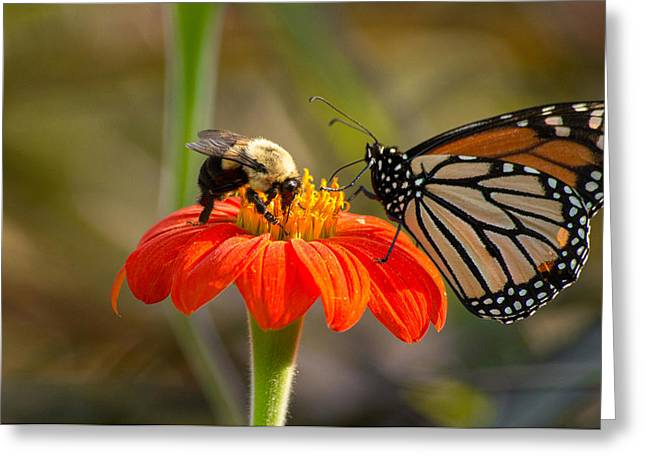 Greeting Card featuring the photograph Butterfly And Bumble Bee by Willard Killough III