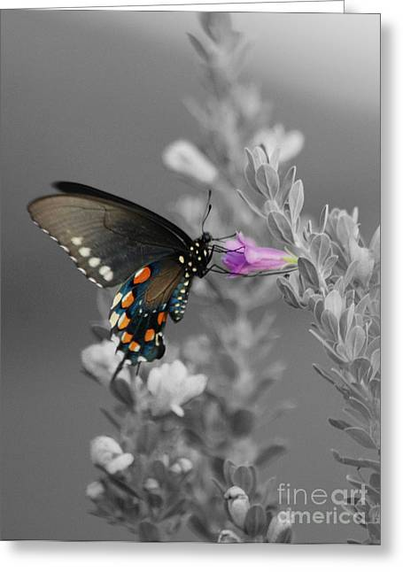 Butterfly And Flower Greeting Card by Jim Wright