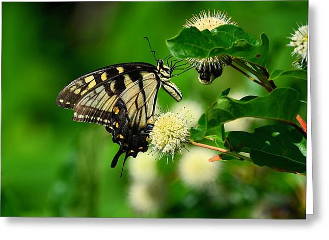 Butterfly And The Bee Sharing Greeting Card by Kathy Eickenberg