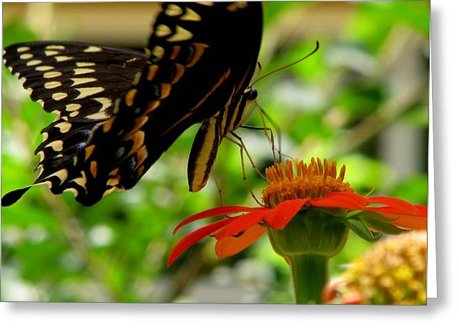 Butterfly And The Flower Greeting Card by Dottie Dees