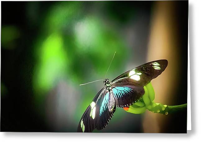 Greeting Card featuring the photograph Butterfly At Cleveland Botanical Gardens by Richard Goldman