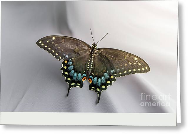 Butterfly At Picnic Greeting Card by Robert Frederick