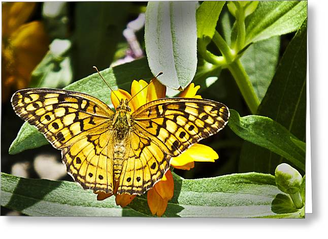 Greeting Card featuring the photograph Butterfly At Rest by Bill Barber