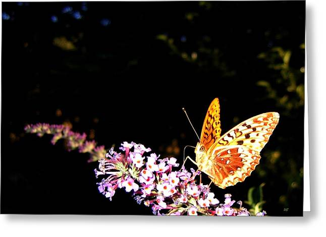 Butterfly Banquet 1 Greeting Card by Will Borden