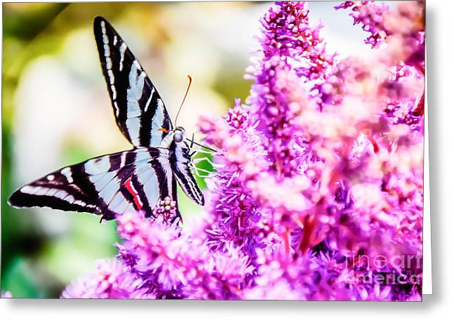 Butterfly Beautiful  Greeting Card