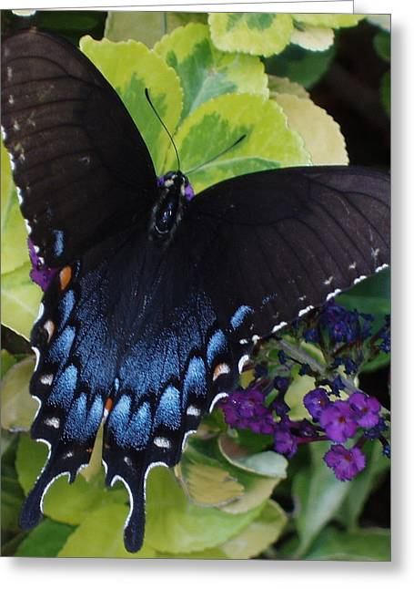 Greeting Card featuring the photograph Butterfly Beauty Brown And Blue 2 by Kicking Bear  Productions