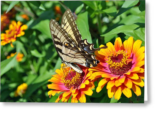 Butterfly Beauty Greeting Card by Dion Baker