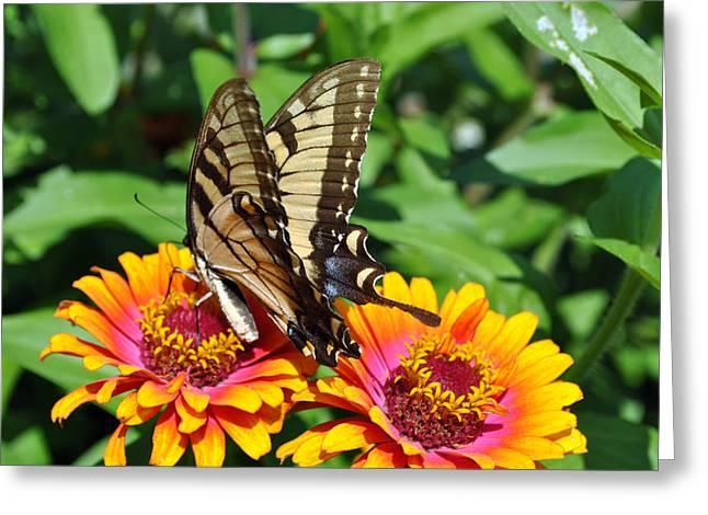 Butterfly Beauty II Greeting Card by Elizabeth Del Rosario-Baker