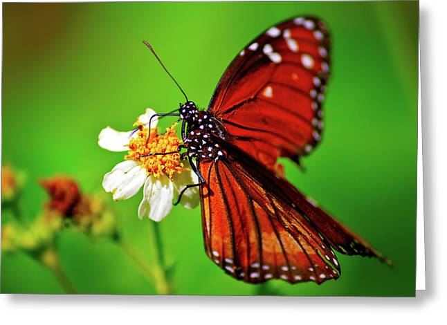 Butterfly Beauty Greeting Card by Mark Andrew Thomas