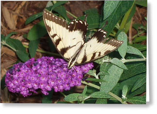 Butterfly Beauty Yellow Greeting Card by Kicking Bear  Productions