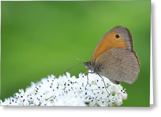 Greeting Card featuring the photograph Butterfly by Bess Hamiti