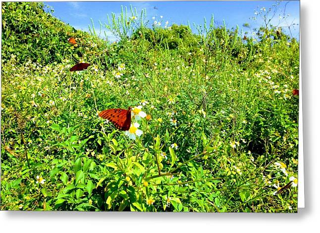 Butterfly Bonanza Greeting Card