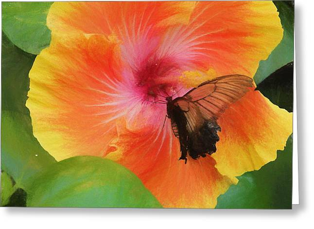 Butterfly Botanical Greeting Card by Kathy Bassett
