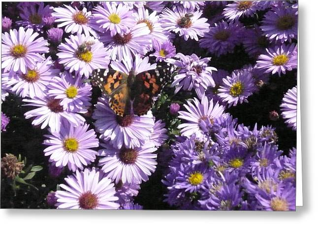 Butterfly Bush Greeting Card by Connie Young