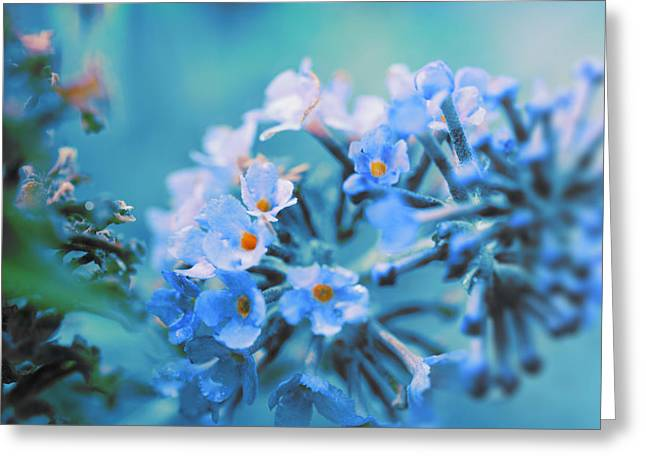 Greeting Card featuring the photograph Butterfly Bush by Douglas MooreZart