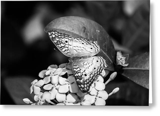 Butterfly Bw - Ins18 Greeting Card