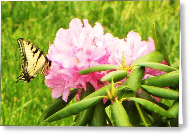 Butterfly Greeting Card by Cindy Gacha