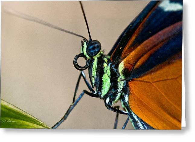 Butterfly Closeup Greeting Card by Christopher Holmes