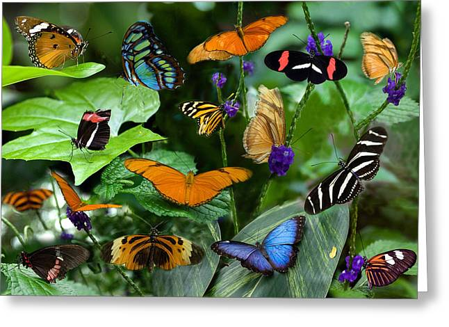 Butterfly Collage Greeting Card by Cabral Stock