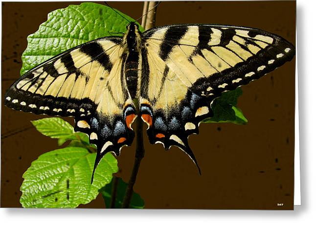 Butterfly Collection Design Greeting Card by Debra     Vatalaro
