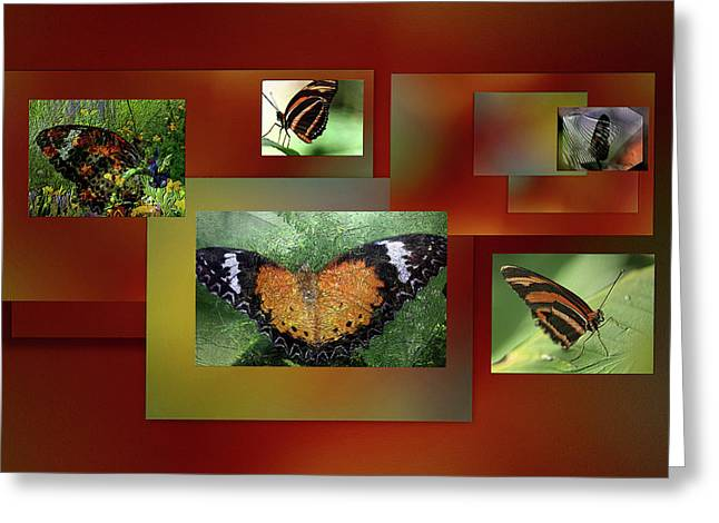 Greeting Card featuring the photograph Butterfly Colllage by Irma BACKELANT GALLERIES