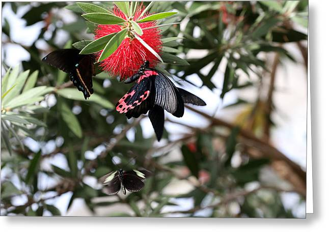 Butterfly Crowd Greeting Card by David Yunker