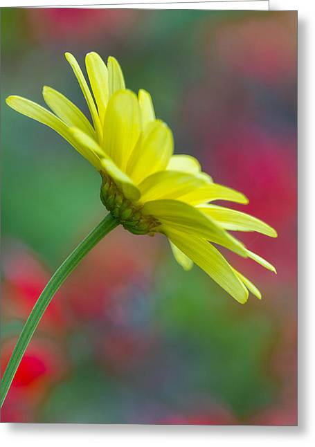 Butterfly Daisy Greeting Card