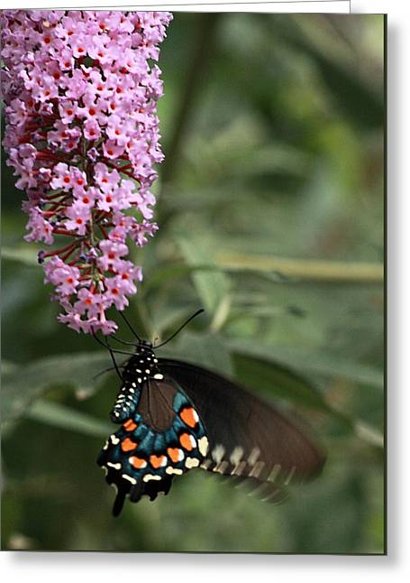 Butterfly Delight Greeting Card