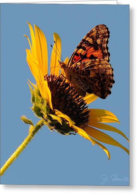 Butterfly Dining Greeting Card by Joe Bonita