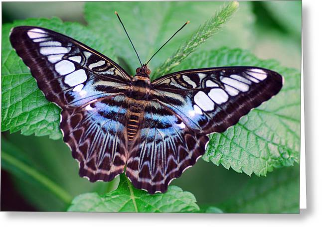 Butterfly Greeting Card by Don  Wright
