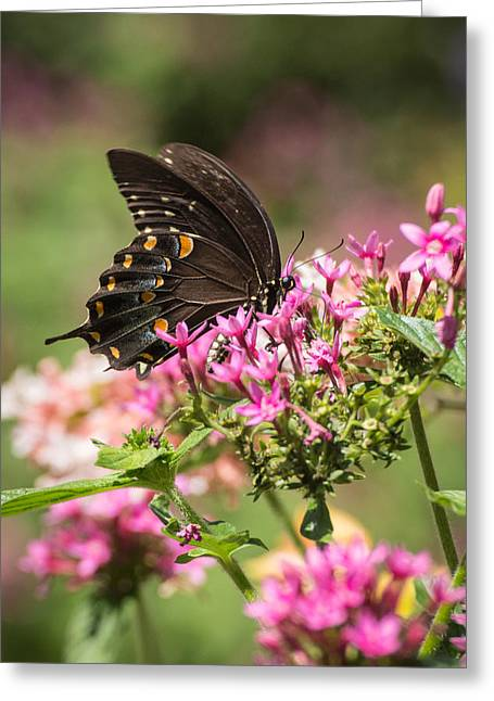 Greeting Card featuring the photograph Butterfly Dream by Julie Andel