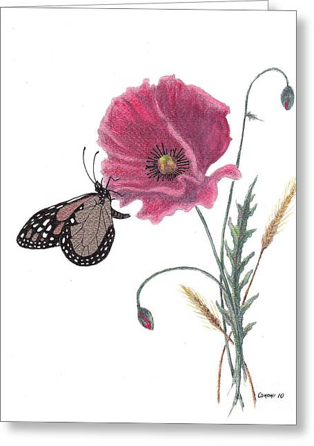 Butterfly Dreaming Greeting Card by Stanza Widen