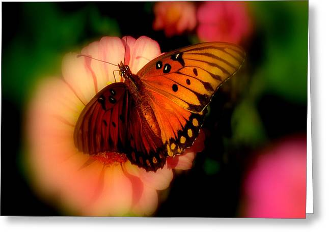 Butterfly Dreams Greeting Card by Dottie Dees