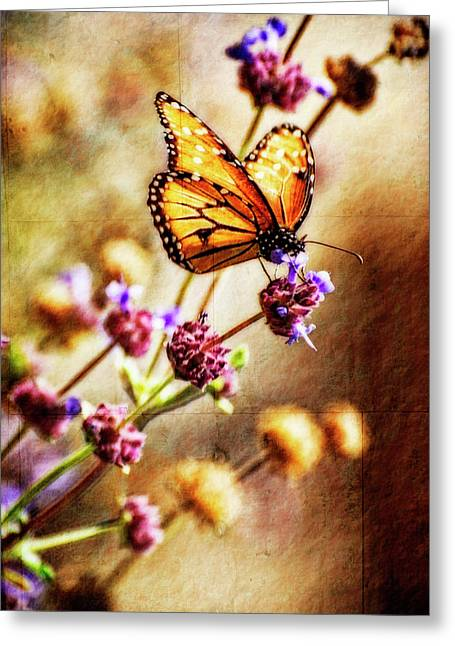 Queen Butterfly Greeting Cards - Butterfly Dreams Greeting Card by Saija  Lehtonen