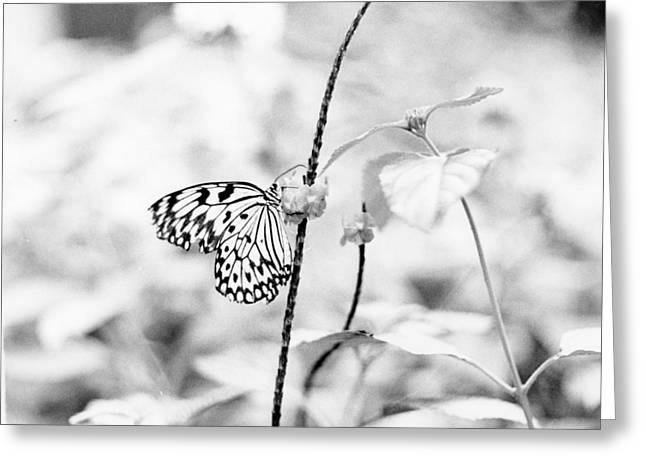 Butterfly Eatting  Greeting Card