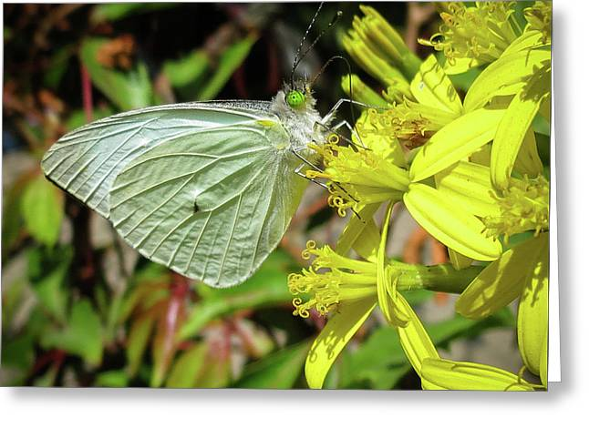Butterfly Feasting On Yellow Flowers Greeting Card